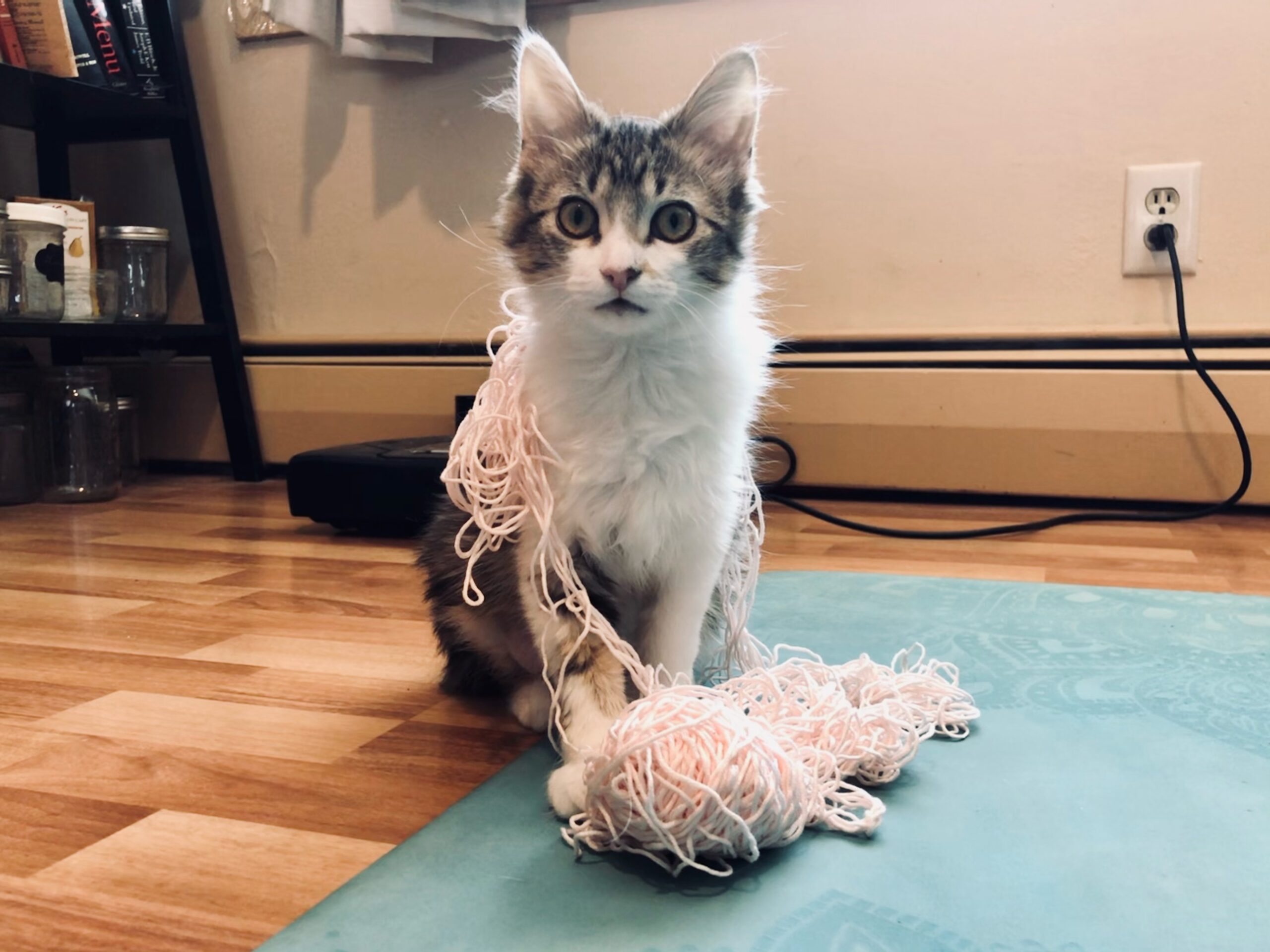 kitten on yoga mat covered in yarn that used to be a ball.
